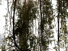 201004 Fontainebleau